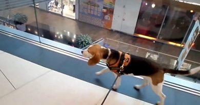 Las superficies comerciales se vuelven dog friendly