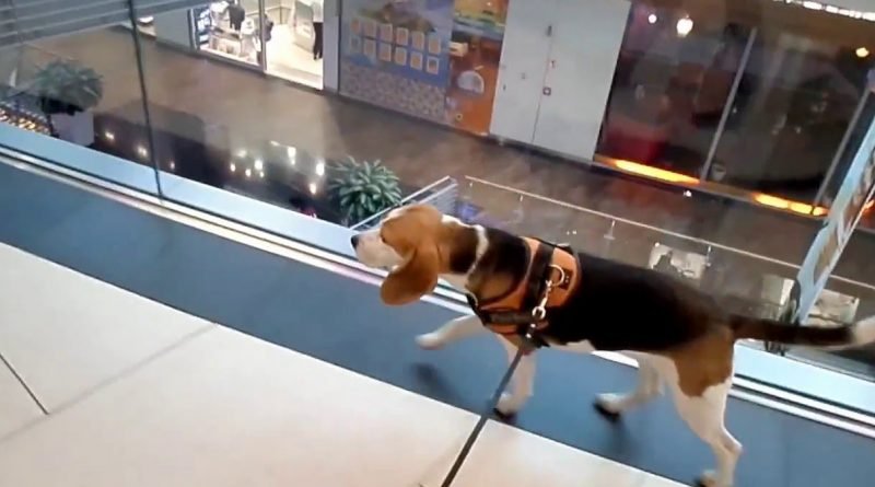 Las superficies comerciales se vuelven dog friendly