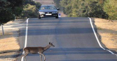 Repunte en el número de atropellos a animales en carretera