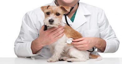 Tratamientos veterinarios obligatorios en mascotas o animales de compañía