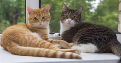 Oda prosaica a los Gatos de Alcobendas
