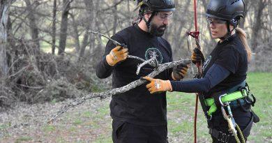 Arboristas, los especialistas más demandados de España