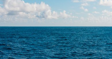 El Mediterráneo ya tiene 1.000 especies invasoras
